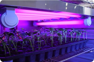 Plants with lighting inside test chamber
